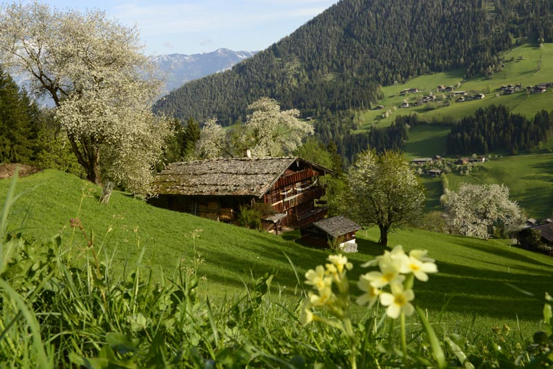 Summer Holidays in the Alpbachtal